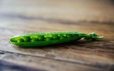Alla scoperta dei Piselli, il legume superfood